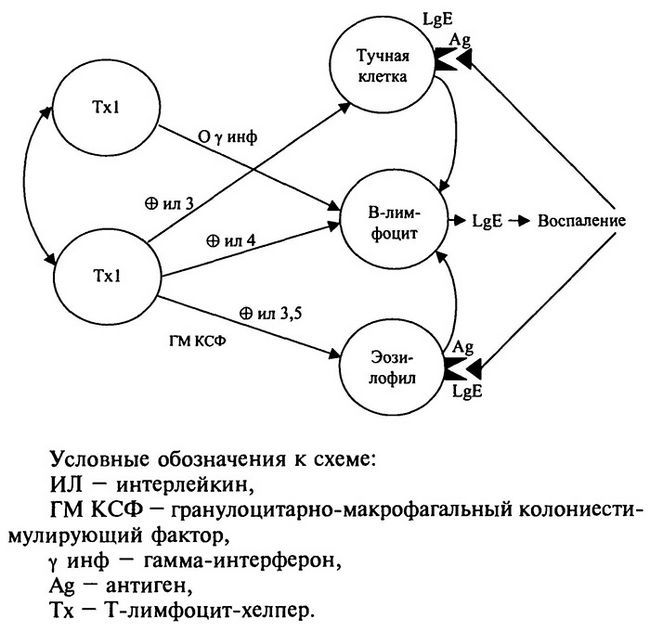Схема алерген-специфічної імунотерапії (по Г. Б. Федосєєва, 1998)