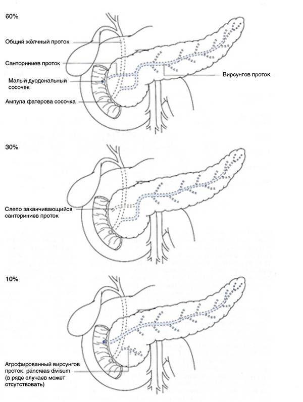 Анатомічна конфігурація внутріпанкреатіческая протоковой системи