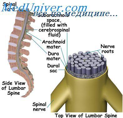 Секреція спинномозкової рідини. Фізіологія периваскулярних просторів