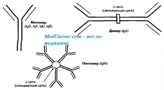 Аутосомно-рецесивний синдром гіперпродукції імуноглобуліну м (igm). Мутація гена aid