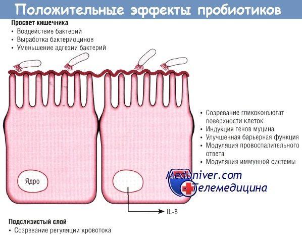 Ефективність пробіотиків у профілактиці виразкового некротизирующего ентероколіту (янек) у недоношених дітей