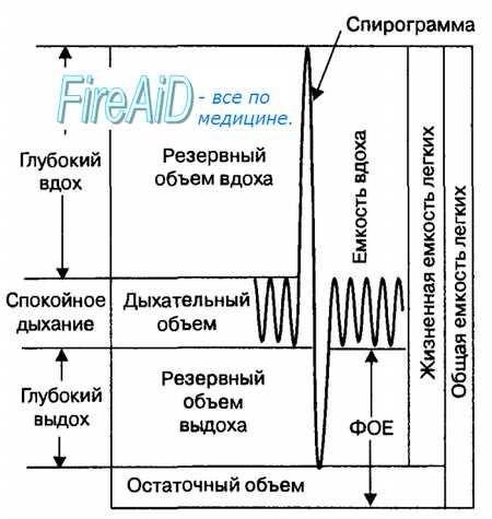 Фази дихання. Обсяг легкого (легких). Частота дихання. Глибина дихання. Легеневі обсяги повітря. Дихальний обсяг. Резервний, залишковий обсяг. Ємність легенів.
