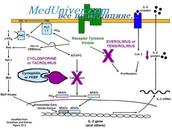 Циклоспорин для іммуносупрессіі.показанія і протипоказання
