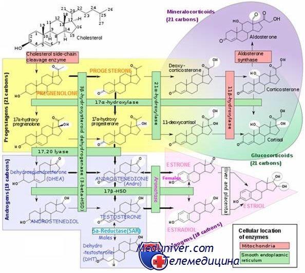 Діагностика стероїдних гормонів. Методи