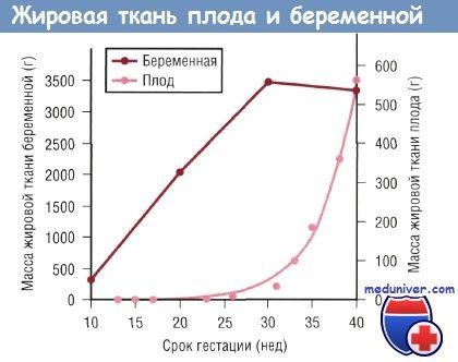Значення омега-6 і омега-3 жирних кислот для недоношеної новонародженої дитини