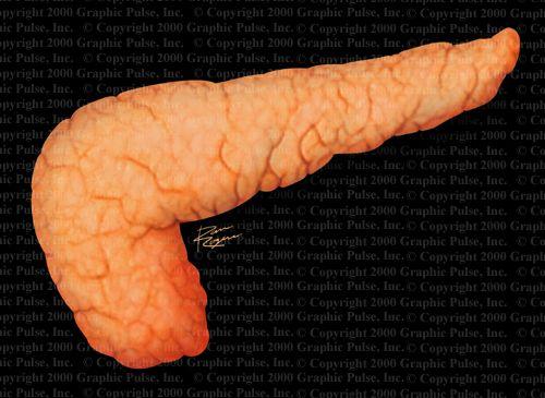 Форма підшлункової залози