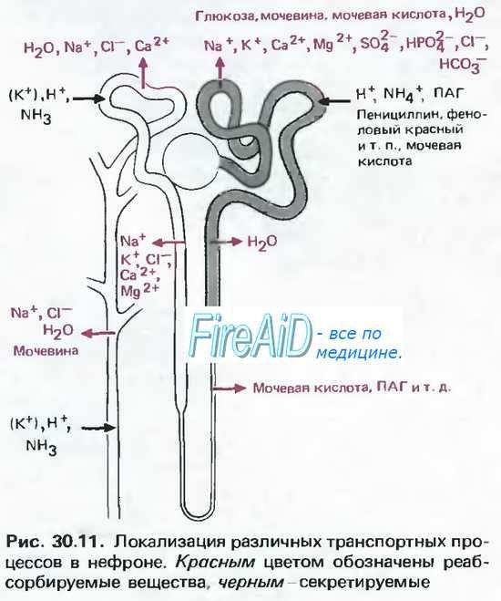 Нирковий канальцевий ацидоз. Проксімальноканальцевий