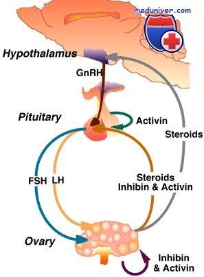 Функції активина. Вплив на синтез статевих гормонів