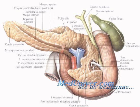 Функція підшлункової залози у новонароджених дітей