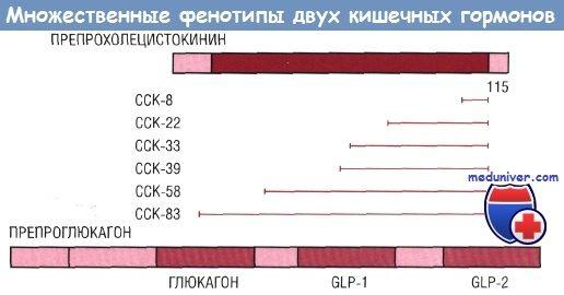Гастроинтестинальні гормони і пептиди