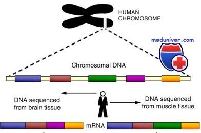 гени людини