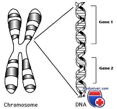 хромосоми людини