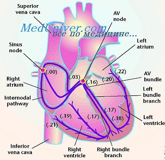 Дихальний ритм. Походження дихального ритму. Пребетзінгерова область.