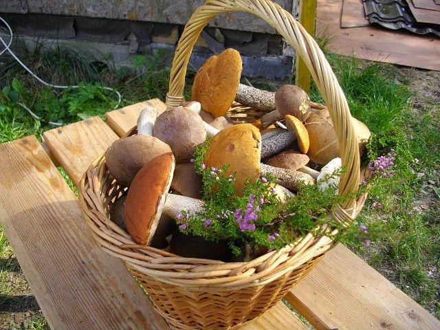 Чи можна при гастриті гриби?