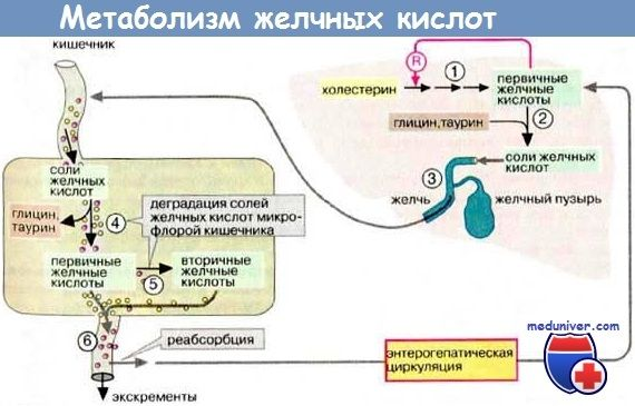 Прогресуючий сімейний внутрішньопечінковий холестаз (псвх) типи, діагностика