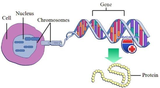 хромосомні аномалії