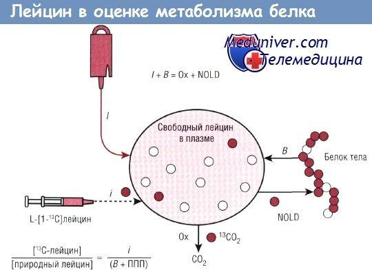 Використання лейцину, фенілаланіну для оцінки метаболізму білків