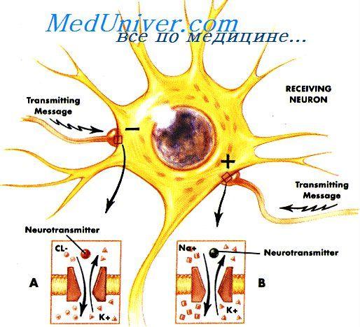 Хвороба альцгеймера. Ослаблення пам`яті при амілоїдних бляшках