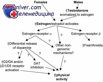 Яєчниковий стероидогенез. Теорія двох клітин двох гонадотропінів