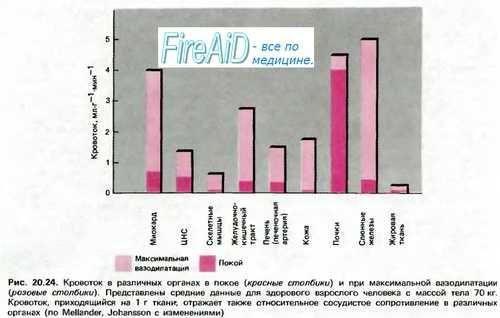 Ендотелій судин. Роль (значення) ендотелію в регуляції просвіту судин.
