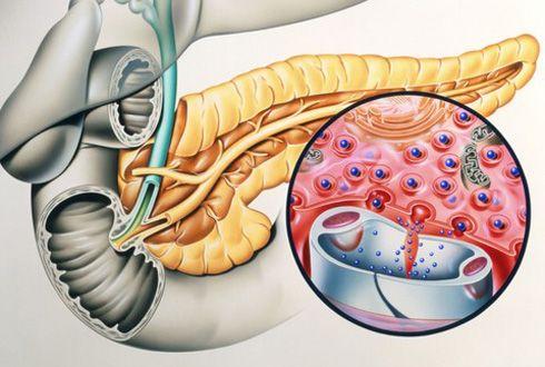 Що підшлункова залоза виділяє в кров?