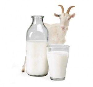 Козяче молоко при гастриті