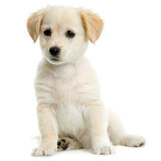 Лікування панкреатиту у собак