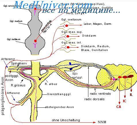 Масивна стимуляція симпатичної нервової системи. Стимуляція парасимпатичної нервової системи