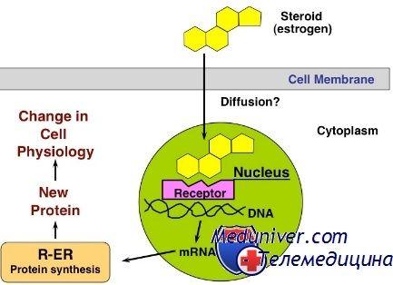 механізми дії гормонів
