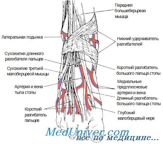 катетеризація периферичної артерії у новонародженого