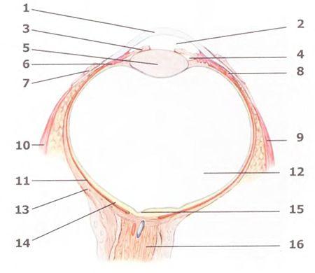 Методики очищення органів зору та слуху