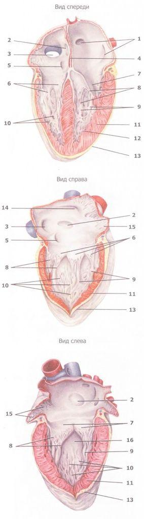 Методики очищення судин і серцевого м`яза