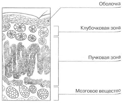 mozg121.jpg