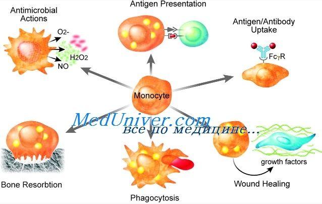 Порушення функції моноцитів і макрофагів імунітету