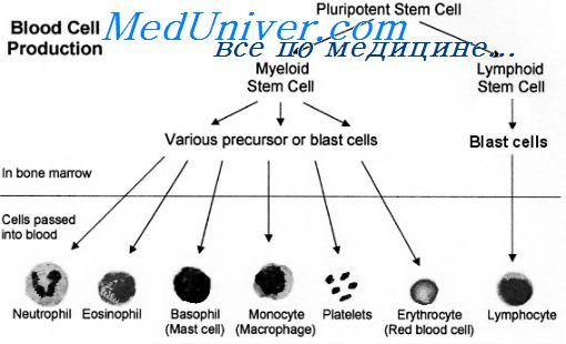 антигени клітин крові