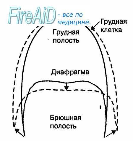 Зовнішнє дихання. Біомеханіка дихання. Процес дихання. Біомеханіка вдиху. Як люди дихають?