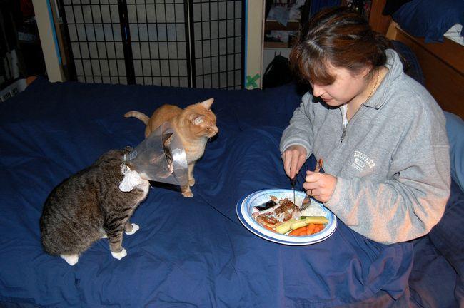 Причини панкреатиту у кішок