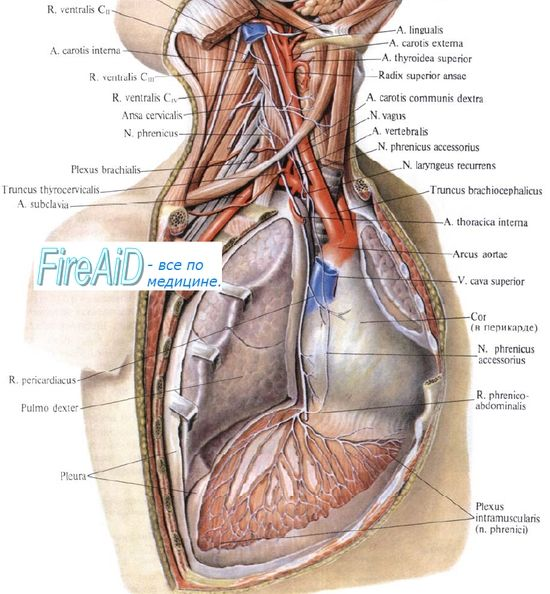 Вплив на дихання фізичного навантаження високої інтенсивності. Енергетична вартість дихання.