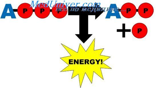 Визначення інтенсивності метаболізму. Пряма і непряма калориметрія
