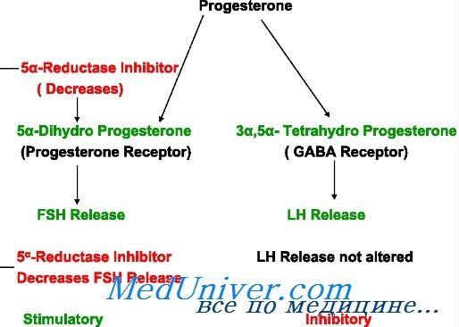 Прогестерон синтез, метаболізм. Прогестеронових рецептори