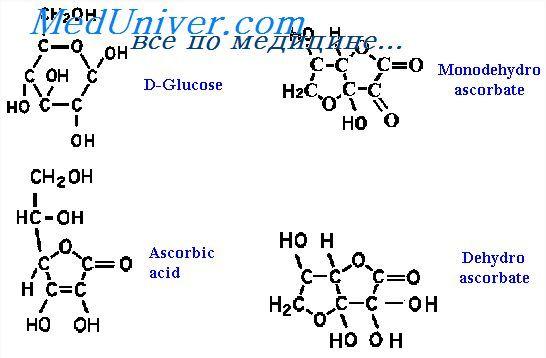 Пантотенова кислота. Фізіологія обміну аскорбінової кислоти