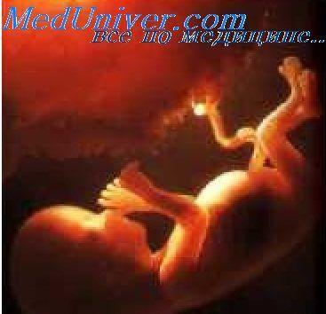 череп ембріона
