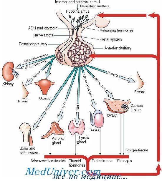 Рецептори до гонадотропних рилізинг гормону. Агоністи і антагоністи