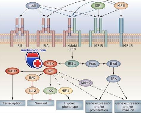 Рецептори з тірозінкіназной активністю. Рецептори до інсуліну і факторів росту