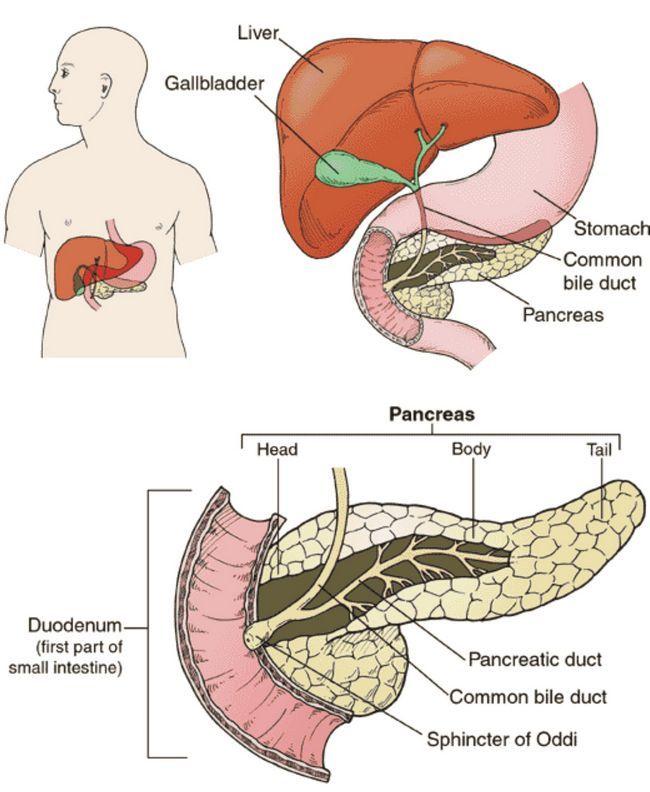 Инкреторная функція підшлункової залози