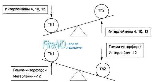 Популяції Т-лімфоцитів. Субпопуляції Т-лімфоцитів. СD4 Т-лімфоцити. СD8 Т-лімфоцити.