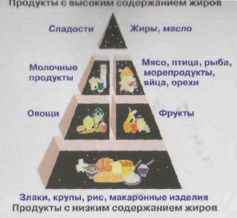 Фізіологічна піраміда харчування