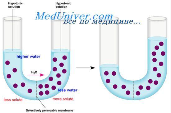формування сперматозоїдів
