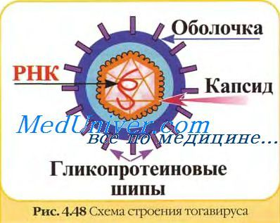 вірус гепатиту Д
