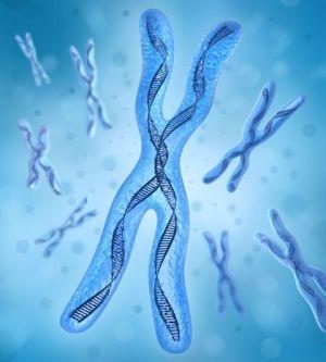 Трисомія по хромосомі 13